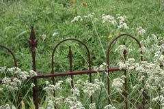 Zaun-und Unkraut-Blumen Stockfoto