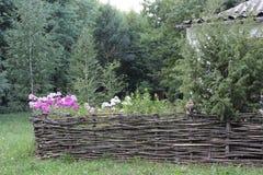Zaun von den Weidenniederlassungen Lizenzfreies Stockbild