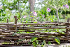 Zaun von Weidenniederlassungen und von Blumen ukraine Stockfoto