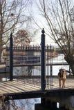 Zauntor geschützt durch einen Hund lizenzfreie stockfotos