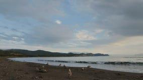 Zavoiko Bay in the Pacific Ocean. stock video