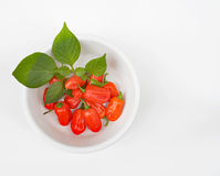 Zavory Mild Habanero peppers in White Bowl Royalty Free Stock Photography