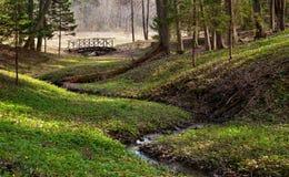Zawiły strumyk w lesie zdjęcie royalty free