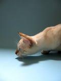 zawiadom kot zdjęcia stock