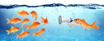 Zawiadomienie, konferencja lub kampania polityczna, Zdjęcie Stock