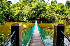 Zawieszenie most nad jeziorem przy tropikalnego lasu deszczowego odkrycia Centre W Sepilok, Borneo obrazy stock