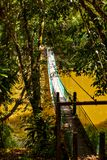 Zawieszenie most nad jeziorem przy tropikalnego lasu deszczowego odkrycia Centre W Sepilok, Borneo fotografia stock