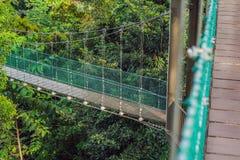 Zawieszenie most nad lasem w Kuala Lumpur zdjęcia stock