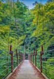 Zawieszenie most nad rzeką w lesie Obrazy Royalty Free