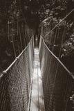 Zawieszenie most, Taman Negara park narodowy, Malezja zdjęcie royalty free