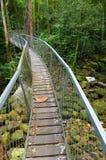 Zawieszenie mosta przejście, Borneo tropikalny las deszczowy Zdjęcie Stock