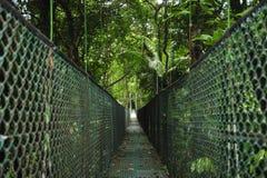 Zawieszenie nożni mosty pozwolą przeglądać różnorodność biologiczną w Tirimbina Biologiczna rezerwa w Costa Rica z góry obrazy stock
