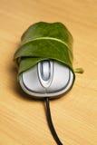 zawijająca liść komputerowa mysz zdjęcia royalty free
