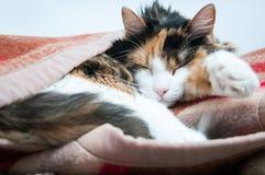 Zawijający w górę kota Zdjęcie Royalty Free