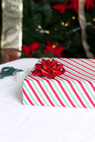 Zawijający prezent przed drzewem Zdjęcie Royalty Free
