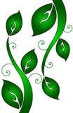 Zawijasów liście i winogrady Obraz Stock