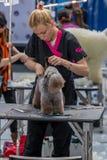 Zawody międzynarodowi psia kosmetyczna rywalizacja w Sant Antoni de Calonge w Hiszpania, 19 05 2018, Hiszpania Obrazy Royalty Free