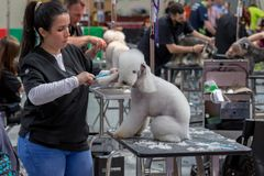 Zawody międzynarodowi psia kosmetyczna rywalizacja w Sant Antoni de Calonge w Hiszpania, 19 05 2018, Hiszpania Obraz Stock
