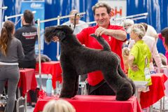 Zawody międzynarodowi psia kosmetyczna rywalizacja w Sant Antoni de Calonge w Hiszpania, 19 05 2018, Hiszpania Zdjęcie Stock