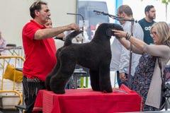 Zawody międzynarodowi psia kosmetyczna rywalizacja w Sant Antoni de Calonge w Hiszpania, 19 05 2018, Hiszpania Zdjęcie Royalty Free