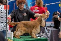Zawody międzynarodowi psia kosmetyczna rywalizacja w Sant Antoni de Calonge w Hiszpania, 19 05 2018, Hiszpania Zdjęcia Stock