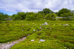 Zayatsky-Insel, Solovetsky-Archipel Lizenzfreies Stockfoto