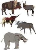zbiór silne zwierzę Obraz Stock