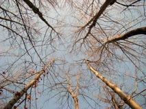 zbieżni drzewa zdjęcia stock