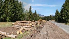 Zbierać bele drewno, obok lasowej drogi z górami wewnątrz fotografia royalty free