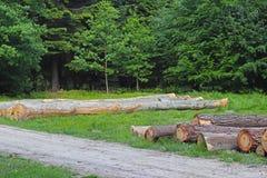 Zbierać drewno w lesie piłować bele kłama w woodpile Ogrzewać przesłanki w wiosce Przemysłowy wylesienie obrazy stock