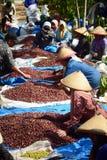 Zbierać kawę W INDONEZJA Zdjęcia Royalty Free