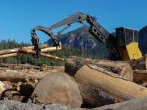 Zbierać przerobowego drewnianego leśnego przemysłu niebieskie niebo obraz royalty free