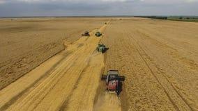 Zbierać pszenicznego żniwiarza Rolnicza maszyny żniwa adra na polu Zdjęcie Stock