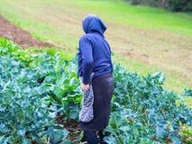 Zbierać warzywa w wsi chłopem zdjęcie stock