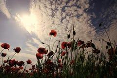 Zbierać, wiosna i lato, zdjęcia stock
