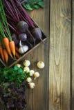 Zbiera świeżych warzywa od marchewki, beetroot, cebula, czosnek na starej drewnianej desce Odgórny widok, wieśniaka styl kosmos k Zdjęcie Royalty Free