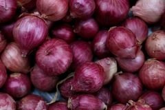 Zbierać Czerwone cebule w zbiorniku zdjęcie royalty free