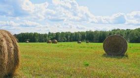 Zbiera sceny staczających się haystacks na zielenieje pole zbiory