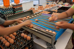 zbieracki jajeczny rolnej ręki ma wielkościowy pracownik obrazy stock