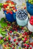 Zbierackie świeże dzikie jagody Fotografia Stock