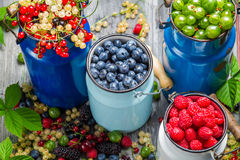 Zbierackie świeże dzikie jagody Obraz Stock