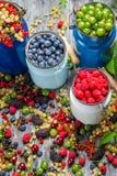 Zbierackie świeże dzikie jagody Zdjęcia Royalty Free