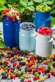 Zbierackie świeże dzikie jagody Fotografia Royalty Free