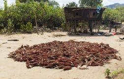 Zbierająca durry uprawa Omo dolina Etiopia Fotografia Stock