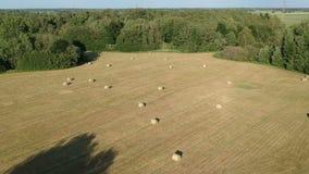 Zbierająca lato czasu ziemi uprawnej łąka z siano belami, antena zdjęcie wideo
