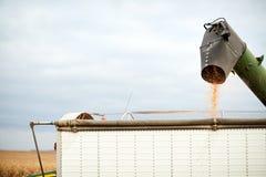 Zbierający kukurydz nasiona opróżnia od syndykata Zdjęcie Stock