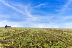 Zbierający kukurydzany pole Obrazy Stock