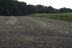 Zbierający pole canola rośliny Zdjęcie Stock