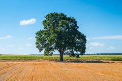 Zbierający pole i jeden drzewo obraz royalty free