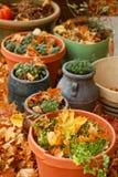 Zbierający ziele w jesieni obrazy stock